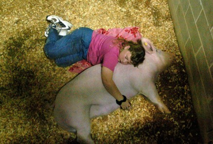 Swine - Southeastern Youth Fair ## Brittany Landers, 10, of Dunnellon, naps with Miss Piggy, a Yorkshire Cross breed gilt, a young female swine, weighing in at 234 pounds, cleaned and ready for the 4-H swine showing at the Southeastern Livestock Pavilion, Wednesday afternoon, Feb. 23, 2005, Ocala, FL. (Jannet Walsh/Star-Banner)2005